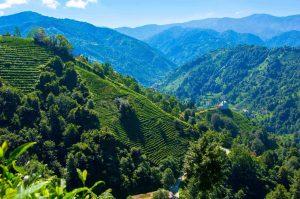 Radosti a strasti života v čiernomorskej provincii čaju (príbeh tureckého učiteľa z Rize)